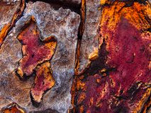 Close up of quiver tree bark. Beautiful colours of African Quiver Tree. Col,ours range between orange, purple, brown and white royalty free stock photo