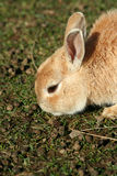 Close up of a rabbit Stock Photos