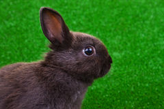 Close-up of rabbit Royalty Free Stock Photos