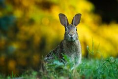 Close-up of Rabbit on Field Stock Photos