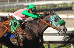 Close Up of Racing Jockey and Thoroughbred Stock Photo