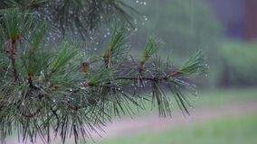 Close-up, rain dripping onto the path. summer rain, a thunderstorm, a heavy in a pine forest, park. water in large drops. Close-up, rain dripping onto the path stock photo