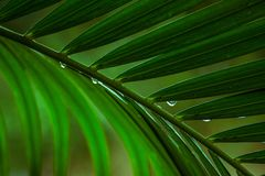 Close up the leaves of palm trees stock photography