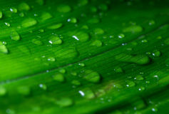 Close up rain drops on leaf. Close up photo of rain drops on a green leaf Royalty Free Stock Photos