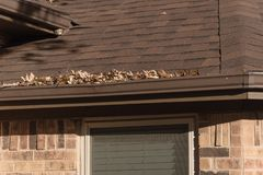 Pile of dried leaves on rain gutter of residential home in Texas stock photography