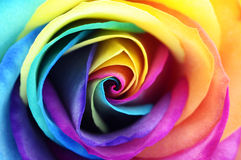 Close up of rainbow rose flower Stock Images