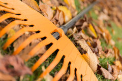 Close up of a rake and leaves in the garden Stock Photo