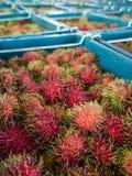 Close up of rambutan fruit Stock Images