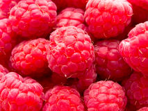 Close up of Rasberries Stock Photography