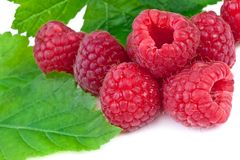Close up of raspberries with leaves  on white background Royalty Free Stock Photos