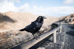 Close-up of raven on wooden fence with mountains in background Stock Photos