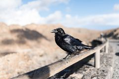 Close-up of raven on wooden fence with mountains in background Stock Photo