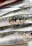 Close Up of Raw Bluetailed Fish Stock Images