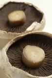 Raw flat mushrooms Stock Photo