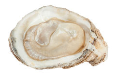 Close-up raw fresh oyster texture, tasty concept. Stock Photo