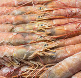 Close up of raw frozen Argentina red shrimps Stock Image
