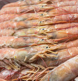 Close up of raw frozen Argentina red shrimps Stock Photos