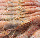 Close up of raw frozen Argentina red shrimps Royalty Free Stock Photo