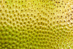 A close-up of a raw fruit jackfruit Royalty Free Stock Image