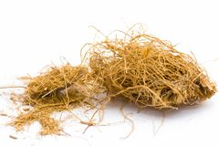 Close up of raw dried vetiver grass or khus isolated on white. Close up of raw khus or vetiver grass a herbal root with full of aroma used in many Indian and royalty free stock image