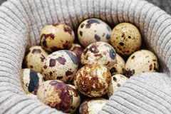 Close-up of raw quail spotted eggs.  Royalty Free Stock Image