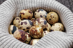 Close-up of raw quail spotted eggs.  Royalty Free Stock Photography