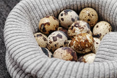 Close-up of raw quail spotted eggs.  Stock Photography
