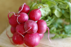 Close-up of raw radish on a wooden board. Selective focus and shallow depth of field.  Stock Photography
