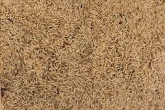 Close up Raw rice in the market stock photo