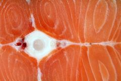 Close-up Raw salmon with bone Stock Images