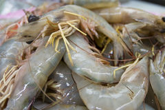 Close up raw shrimp Stock Images
