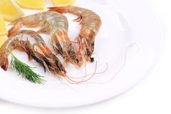 Close up of raw shrimps with lemon. Stock Image