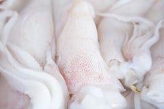 Close up raw squid Stock Image