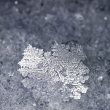 Close-up of real snowflake Stock Image