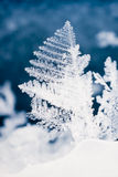 Close-up of real snowflake Royalty Free Stock Image