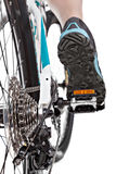 Close up rear view cyclist pedalling mountain bike. Stock Images