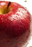 Close up red apple with water droplets. Close up red apple and stem on white isolated background royalty free stock image