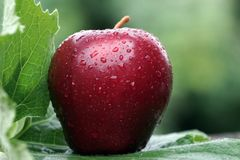 A close-up of red apple with water drops. royalty free stock photos