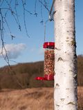 Close up of red bird feeder filled with peanuts. Essex; england; uk Stock Images
