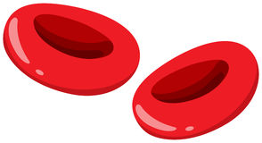Close up red blood cells Stock Images