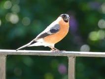 Bird feeding time stock images