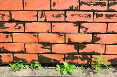 Close up of red brick wall with weed Royalty Free Stock Image