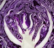 Close up on red cabbage Stock Images