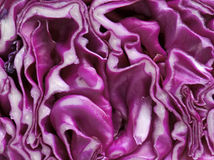 Close up of red cabbage Stock Photography