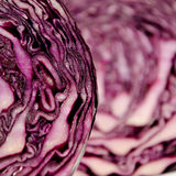 Close-Up of a red Cabbage. An Close-Up from a Red Cabbage. The texture is clearly visible Royalty Free Stock Photos