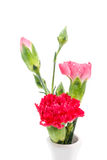Close up Red carnation in vase Royalty Free Stock Images