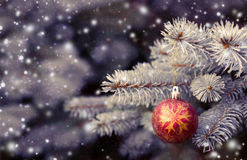 Close up of red christmas ball on fir tree branch. Winter scenery with snow falling and spruce covered with snow.Close up of red christmas ball on fir tree Stock Image