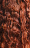 Close-up of red curly hair. Long curly tress of henna hair Stock Image