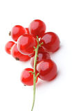 Close up of red currants Stock Photography