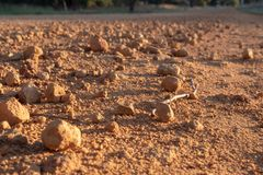 Red gravel and sand road surface of Australia, close. Close-Up of red dirt, red gravel on outback road in Australia stock photo